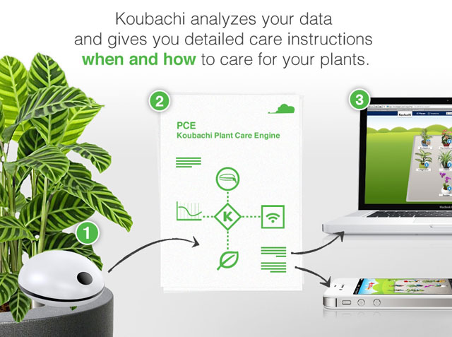 koubachi analyse plants